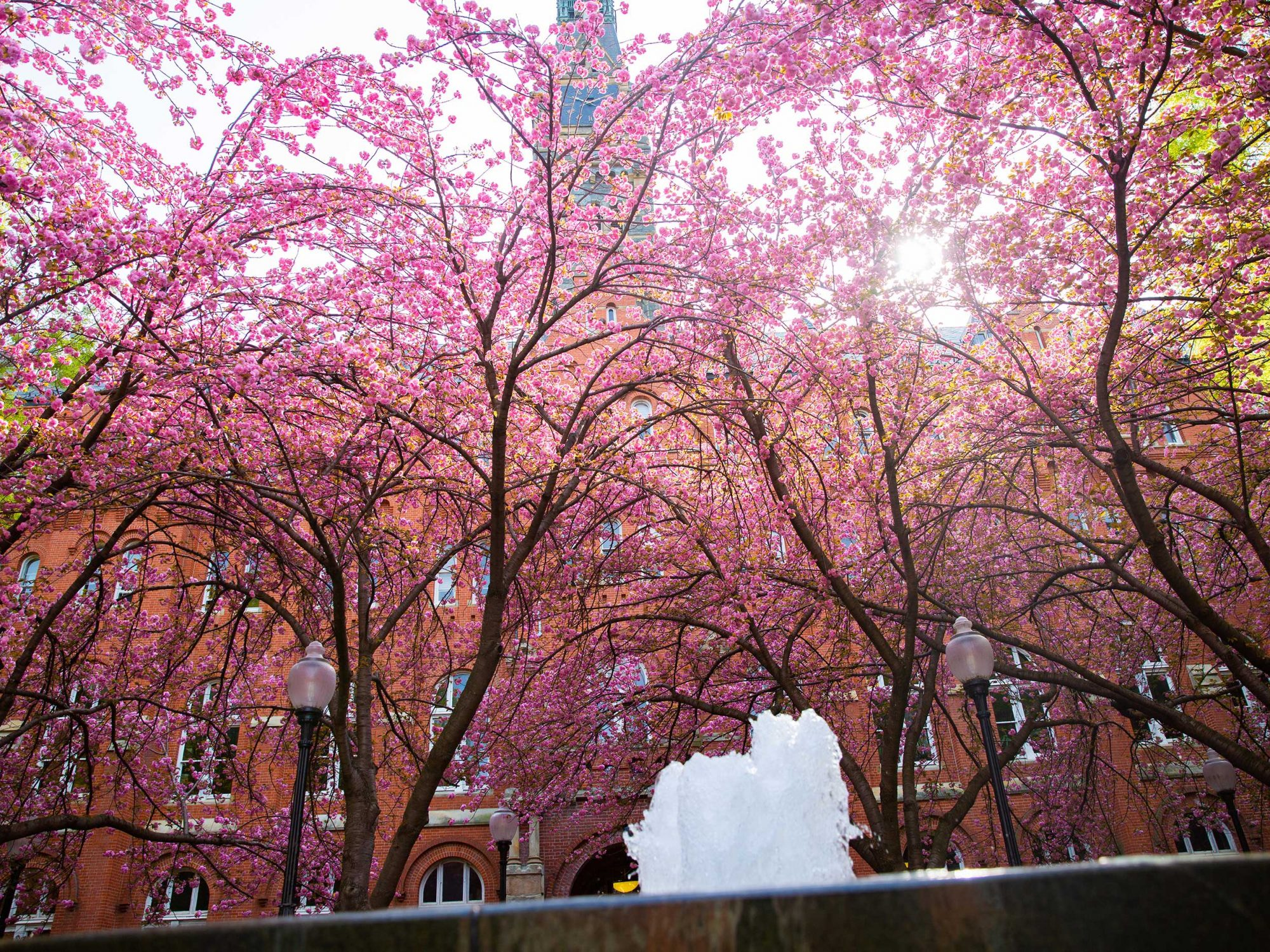 Dahlgren Quadrangle in Spring - showing fountain and blooming trees