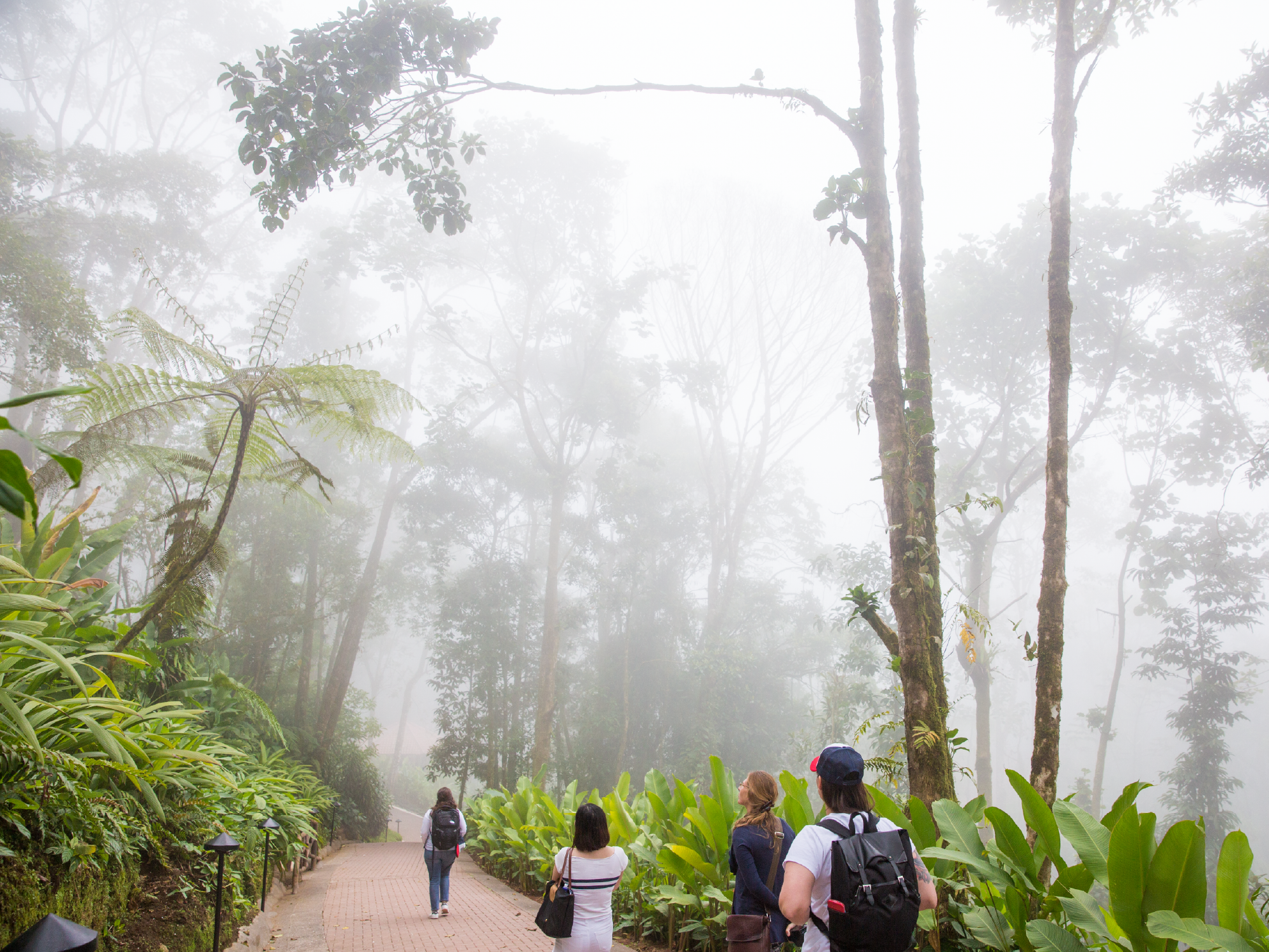 Image of students walking through a canopy in Costa Rica