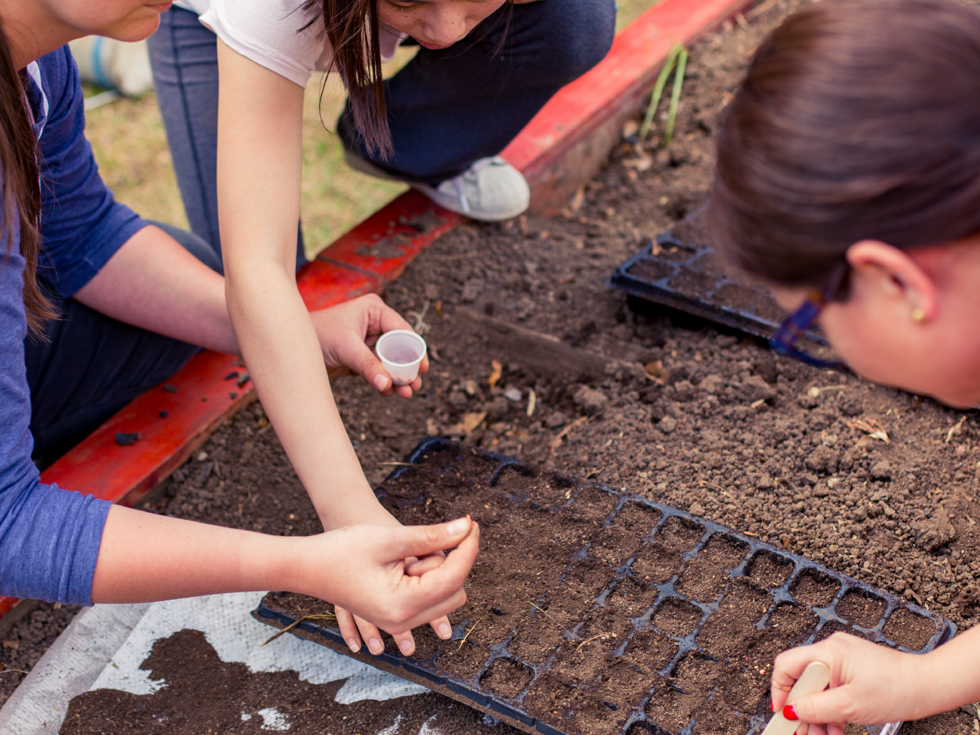 Image of MIDP students planting seeds in Costa Rica