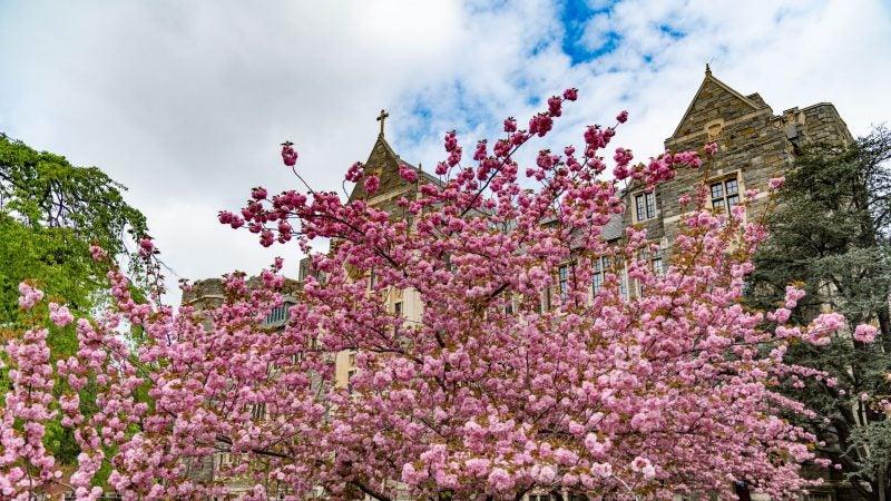 Georgetown Campus in Spring